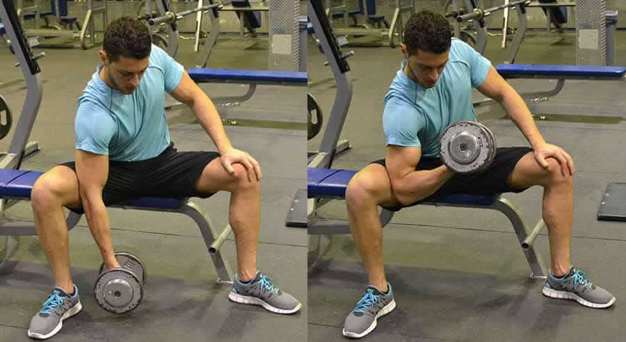 seated-concentration-curls